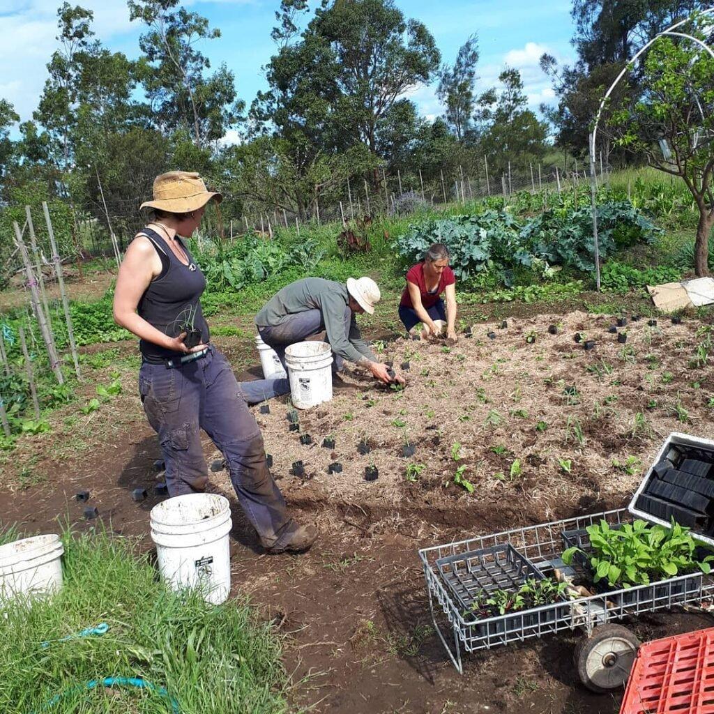 Agriculture Courses & Farm Tours - Purple Pear Farm School