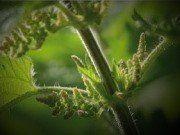 FARM PRACTICES -